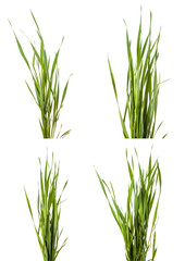 Green grass isolated on white background. Set