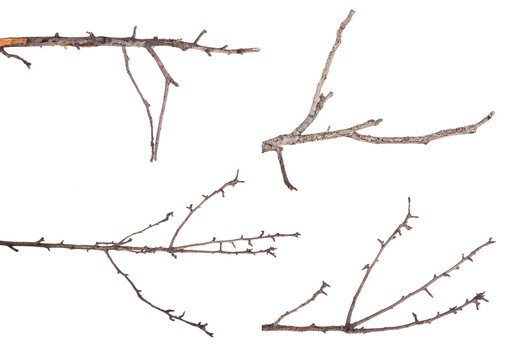 Dry tree branches isolated not a white background. Set