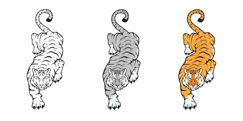 Tiger, isolated on white background, colour and black white illustration, suitable as logo or team mascot