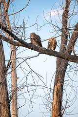 Owls Perched
