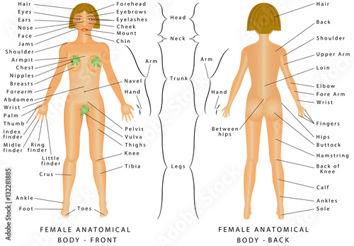 Female Human Body Parts Anatomy Chart The Anatomical Names And Corresponding Common Are Indicated For Specific Regions