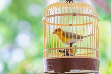 Close up Bird cage Toy with beautiful green white yellow bokeh background.Selective focus on bird.