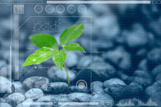 Botany information technologies or Plant Biology analysis  . chart info mixed media