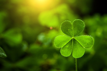 clover leaf in lens flare for Valentine background