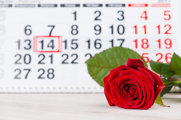 Concept Valentine's Day, red rose on background on the calendar