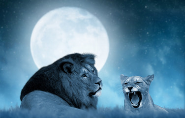 Lion and lioness on the savannah in the background night sky with moon.