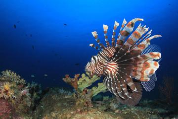 Lionfish fish underwater coral reef