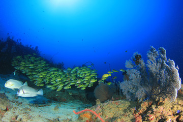 Underwater coral reef with fish