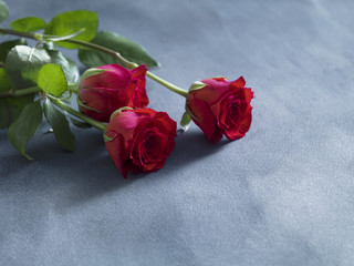 wedding concept with fresh red roses on blue slate background