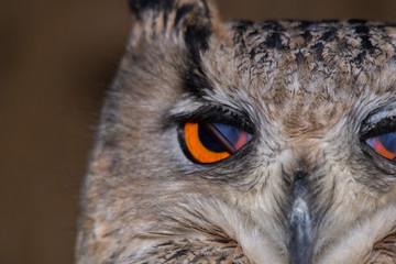 owl eye detail close up macro