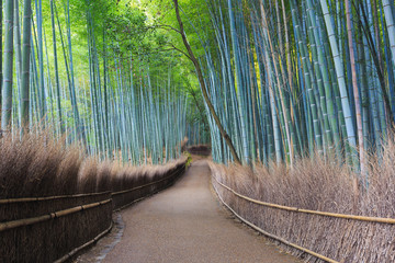 Wall Murals Bestsellers Arashiyama Bamboo Forest in Kyoto, Japan
