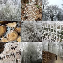 Promenade en hiver dans une forêt givrée