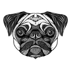 Pug head, illustration, black and white