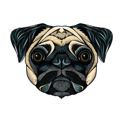 Pug head, illustration