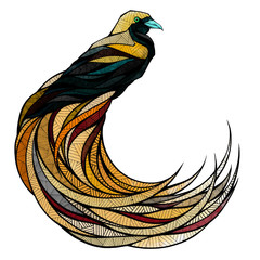 Bird of paradise, illustration