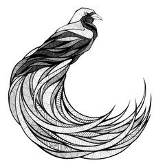 Bird of paradise, illustration, black and white