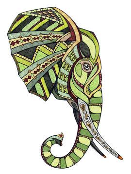 Elephant head, illustration