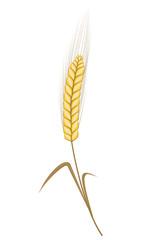 Wheat Ear Vector Illustration
