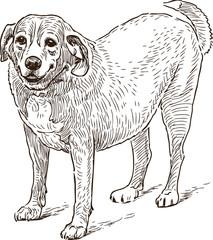 guard dog sketch