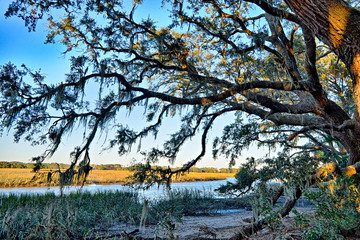 Moss draped Live Oak over the Edisto River at Botany Bay Plantat