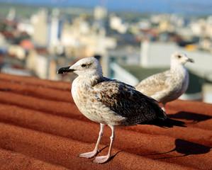 Photo macro white seagulls