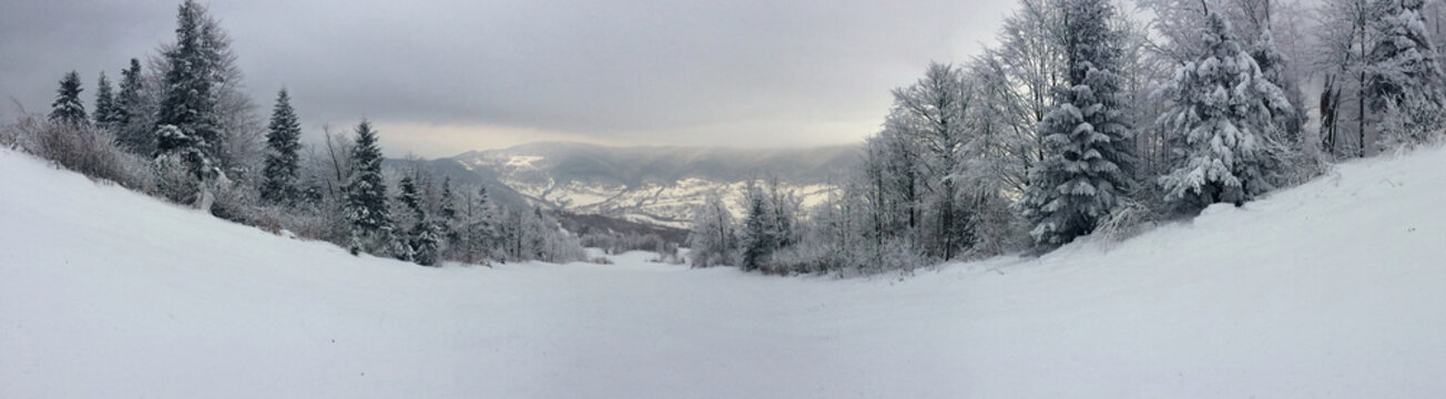 Panorama view of a wild ski slope between snow covered spruces high in winter mountains