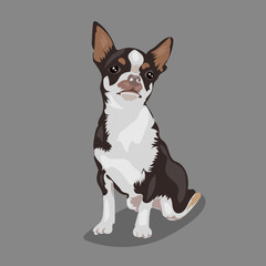 cartoon cute funny vector chihuahua dog at the white background