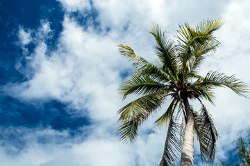 View up to the sky under the coconut tree