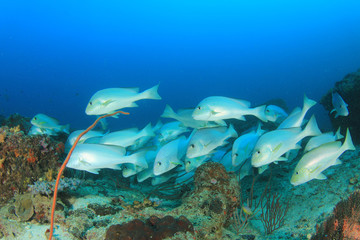 Fish school coral reef underwater sea ocean