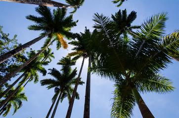 A sun behind palm trees