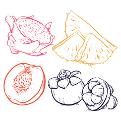 Drawing Pineapple slices, Fruits sketch, Hand drawn clip art