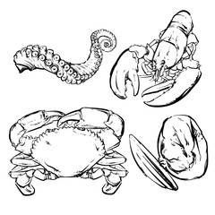 Drawing seafood dinner, Crab, Lobster, Octopus vector clip art