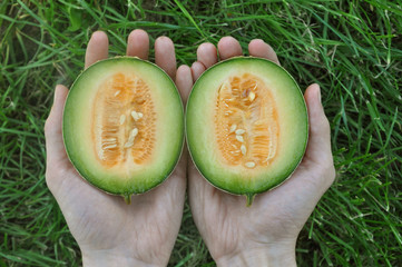 Hands holding halves of dwarf yellow melon on a background of green grass. Top view.