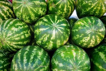 Many ripe green watermelons close up.