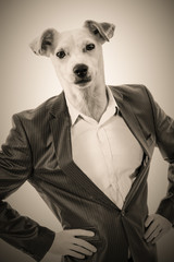 Man with a dog's head: Businessman with the head of a Jack Russell