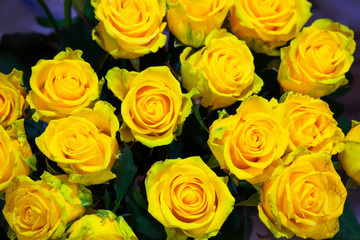 Yellow roses flowers, floral background for mothers day, wedding