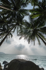 View of nice tropical background with coconut palm trees and rocks over sea and sky in Thailand