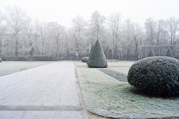 Trees covered hoar-frost in the park a foggy winter day