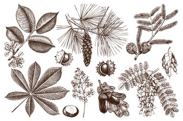 Vector collection of hand drawn trees illustration. Vintage set of leaves, fruits, seeds, nuts, flowers sketch. Botanical garden drawing.