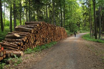 Wandern, Wald, Wanderer, Baumstämme