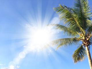 Happy Holidays Palm Tree