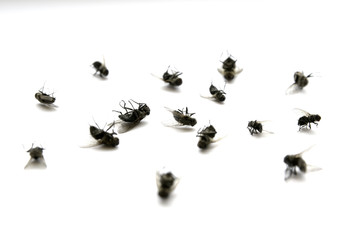 Dead Flies Insects Many Several with Legs in Air
