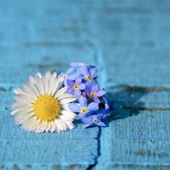 Fototapete - Gänseblümchen und Vergissmeinnicht - Frühlingsblüten