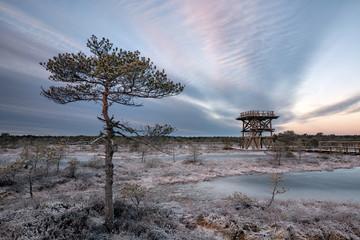 Männikjärve bog observation tower