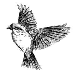 sketch tattoo realistic flying bird