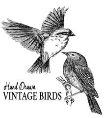 sketch set birds