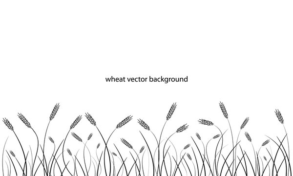 Wheat field line border isolated on white.