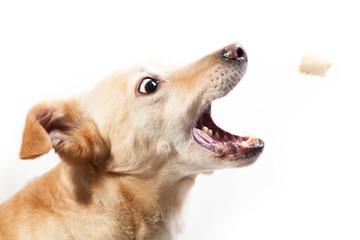 Hund frisst Leckerli