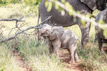 Baby Elephant playing on the road.