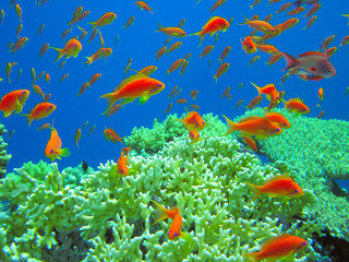 underwater life of tropical sea